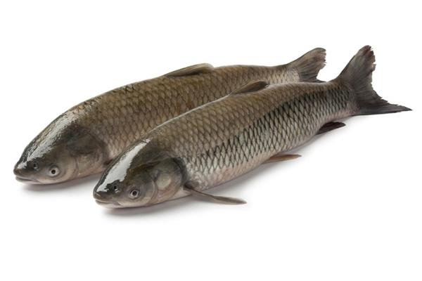 野生草鱼多少钱