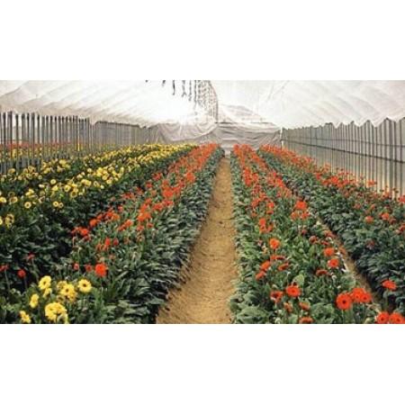 花卉专用膜厂家