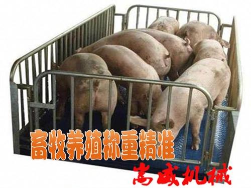 畜牧养殖小地磅小地磅称地磅秤厂家