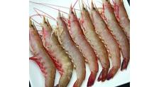 龙虾批发厂家