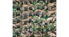 螃蟹批发厂家