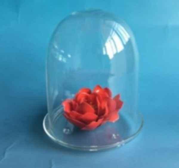 永生花玻璃罩