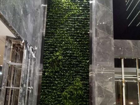 长沙植物墙|植物墙哪家好