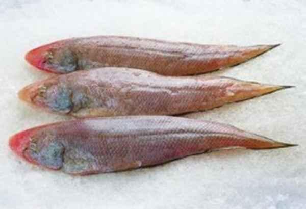 舌头鱼批发销售