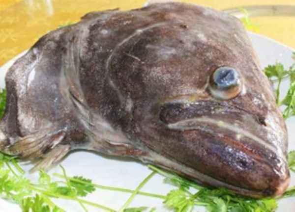 鲽鱼头供应商