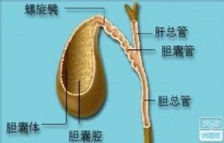 胆囊体积缩小
