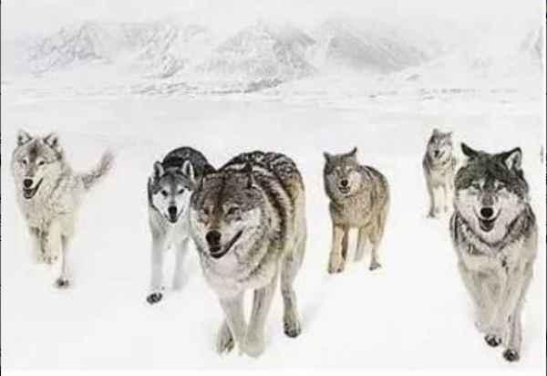 打造狼性管理团队