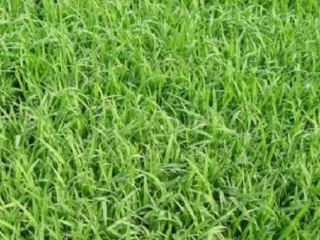 育苗专用肥厂家