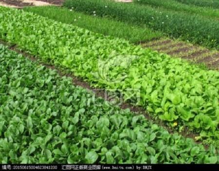 农家绿色蔬菜哪家好