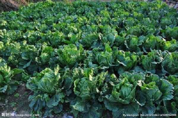 农家蔬菜采摘园哪家好
