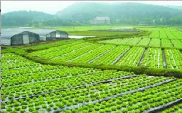 水生植物基地
