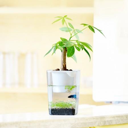 桌面盆栽水草缸