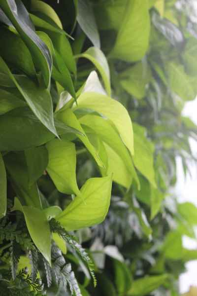 屋顶绿化植物