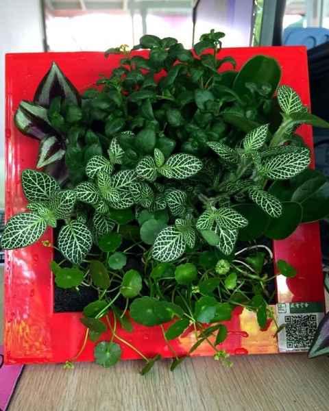 植物墙养护公司