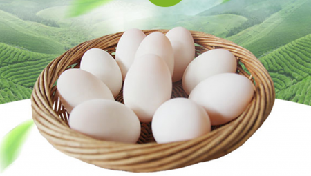 美洲雁蛋的市场价格
