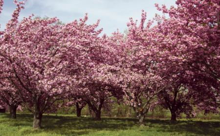 桃花园景区地址
