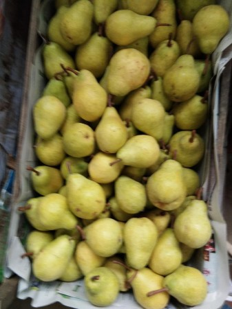葫芦梨果实大,长葫芦形,平均单果重265克,大果重520克.