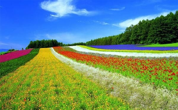 农业旅游项目