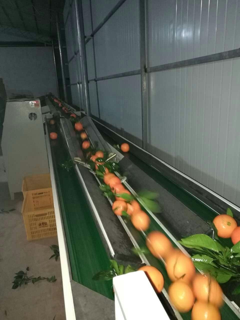 电子水果分选机