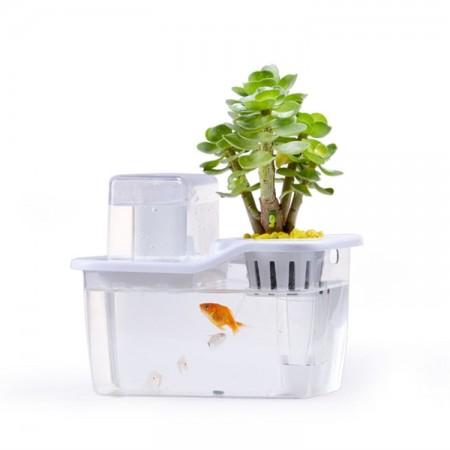 共生生态鱼缸