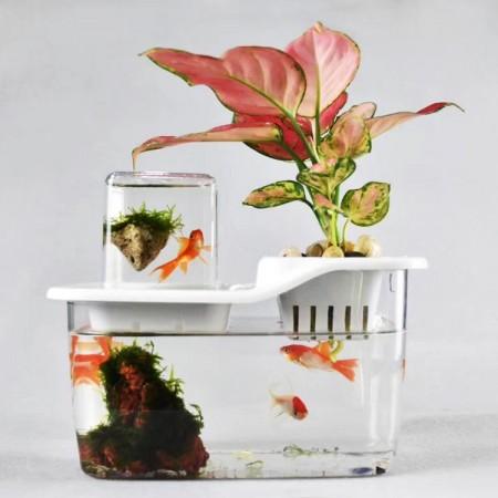 桌面懒人鱼缸办公室绿植