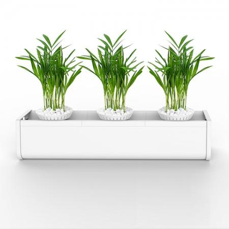 小型水培绿植培植器