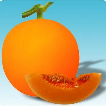甜瓜种子批发