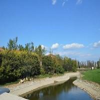 东莞工程绿化养护服务
