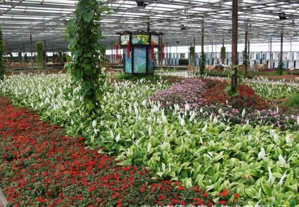 顺义区专业温室盆栽种植