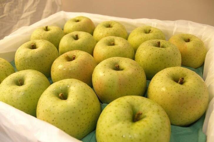 河北王林苹果