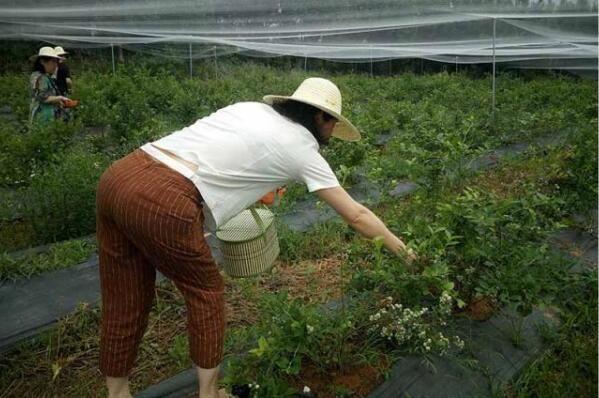 红安蔬果采摘园