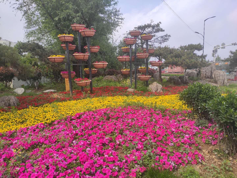 国庆节用花供应商