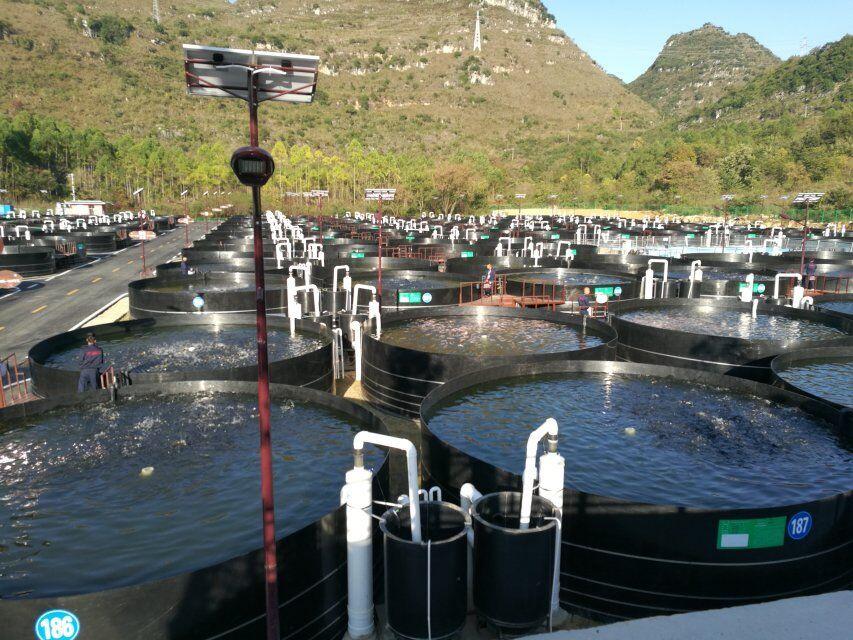 工业循环水养殖系统