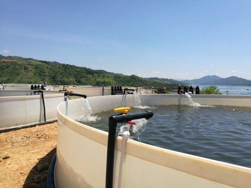 池塘湖泊岸基养殖系统