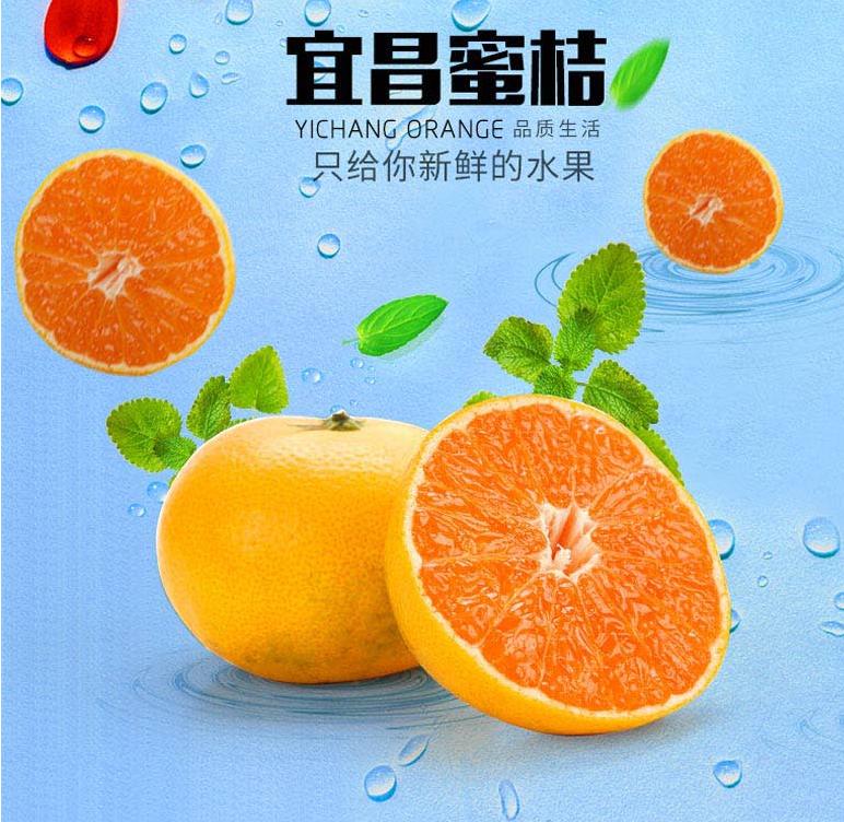 广东蜜桔生产厂家