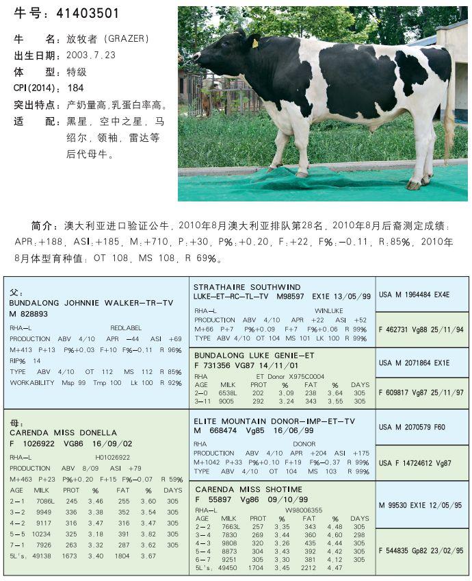 河南种牛销售
