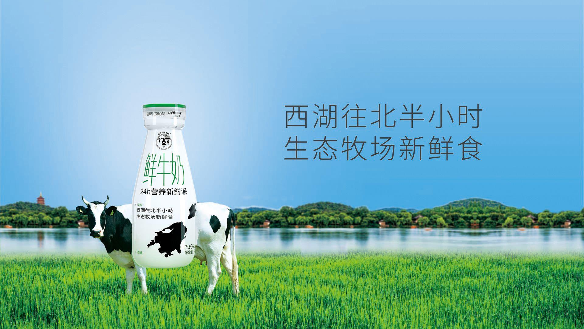 西湖牌健康纯牛奶订购