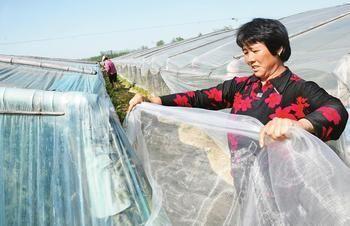 大棚防虫纱网蔬菜凉棚通风防虫网规格全质量好