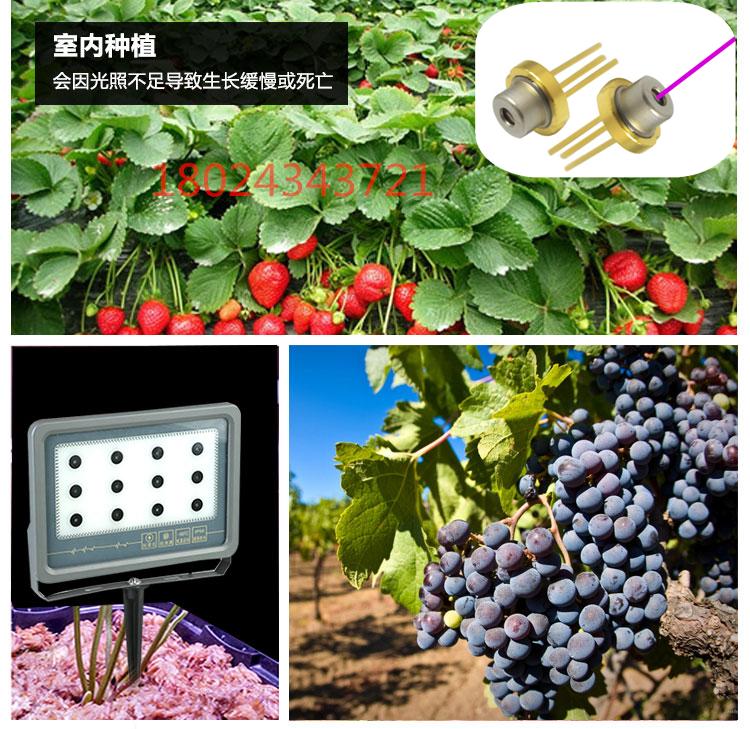 激光鐳射植物生長補光燈溫室大棚植物激光補光燈草莓激光生長燈