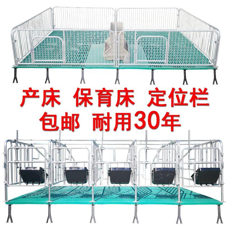 雙體母豬產床 熱鍍鋅全復合保育床 母豬定位欄 自動化料線