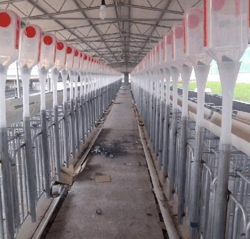 供應養豬設備全自動飼喂養豬料線豬舍自動化料線 自動化喂豬料線