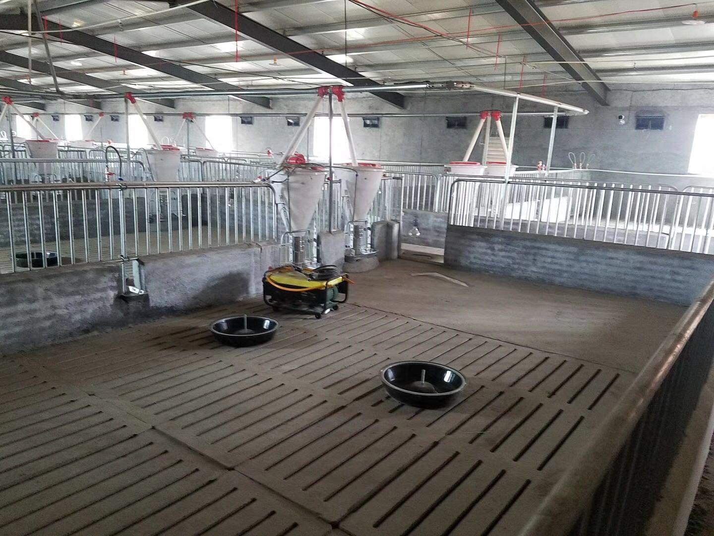 自動化養豬料線 豬舍自動料線 育肥自動上料線價格