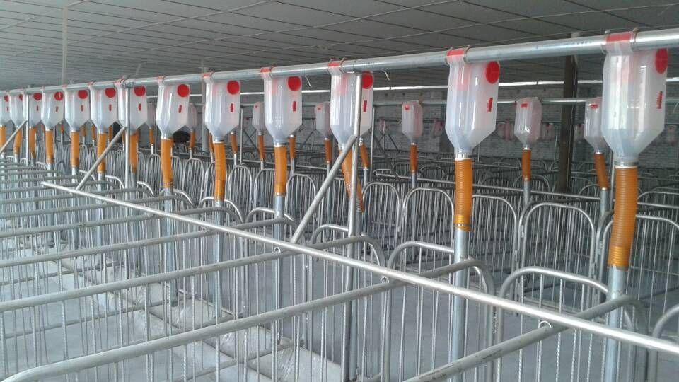 自動化料線直銷 養豬自動化料線 自動化豬舍專用料線 河北供應