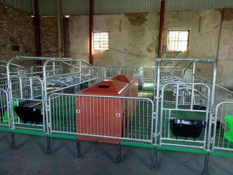 母猪产床加厚热镀锌复合漏粪板猪用养殖场双体猪产床设备