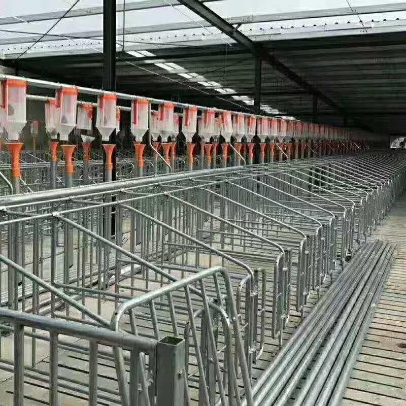 猪场自动化料线 养猪自动上料设备 猪场养猪料线