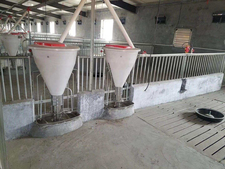 養豬設備 養豬自控喂料系統 豬舍供料系統 豬場自動化料線