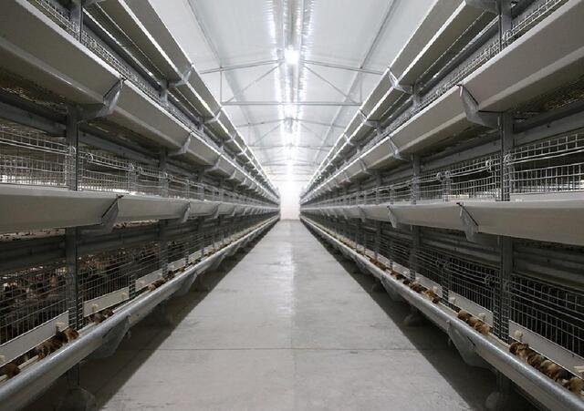 廣州層疊式養雞設備哪家好