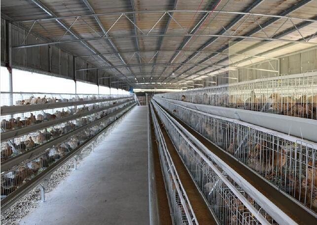 階梯式養雞設備