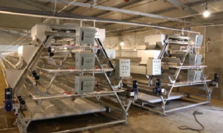 自動化養殖設備