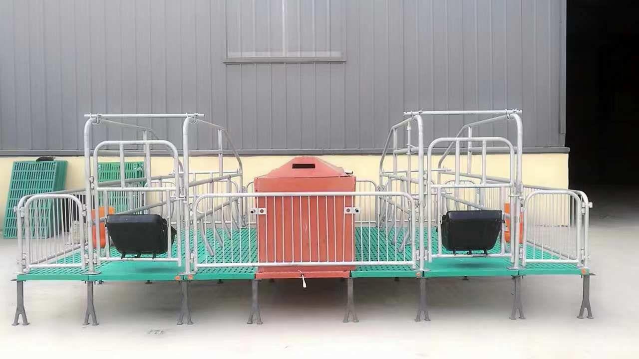 半复合型双体母猪产床 仔猪活动床 产保两用母猪分娩床